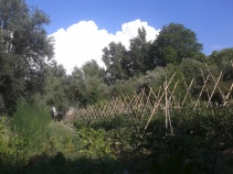 Hueta en verano