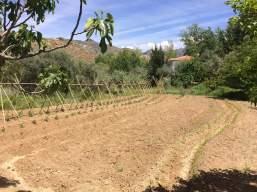 Huerta recién sembrada